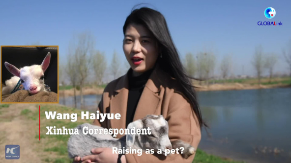 GLOBALink | Life of a goat in China village
